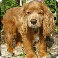Adopt A Pet :: Donnie - Sugarland, TX