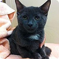 Adopt A Pet :: Tami - Reston, VA
