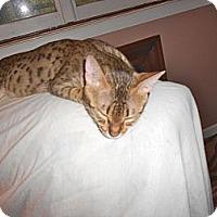 Adopt A Pet :: Gabby - Washington, VA