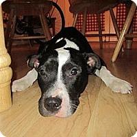 Adopt A Pet :: Peanut - Geismar, LA