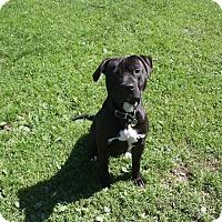 Adopt A Pet :: Buddy - Homer, NY