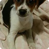 Adopt A Pet :: Noel - Detroit, MI