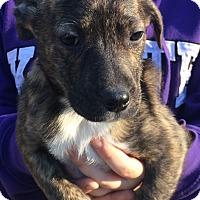 Adopt A Pet :: Patrick#4F - geneva, FL