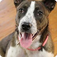 Adopt A Pet :: Tallulah - Knoxville, TN