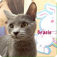 Adopt A Pet :: Gracie - Foothill Ranch, CA