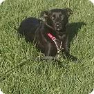 Adopt A Pet :: Shye