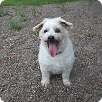Adopt A Pet :: Sam - Red Wing, MN