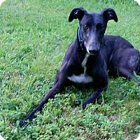 Adopt A Pet :: Clover - Swanzey, NH