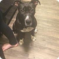Adopt A Pet :: Curtis- Courtesy Post - Alpharetta, GA