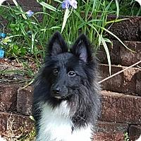 Adopt A Pet :: Vader *10 lbs* - Columbia, SC