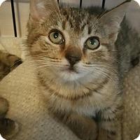 Adopt A Pet :: Rosie - Palmyra, NJ