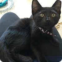 Adopt A Pet :: Emilio - Island Park, NY