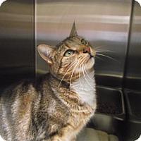 Adopt A Pet :: Lisa - Chambersburg, PA