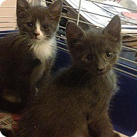 Adopt A Pet :: River n Phoenix - Whitestone, NY