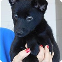 Adopt A Pet :: Duff - Topeka, KS