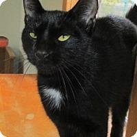 Adopt A Pet :: LUCY - Aiken, SC