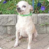 Adopt A Pet :: O'Porkchop - West Chicago, IL