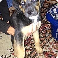 Adopt A Pet :: Hunter - Durham, ON