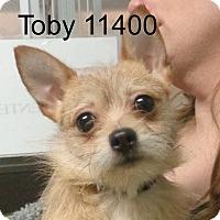 Adopt A Pet :: Toby - Alexandria, VA