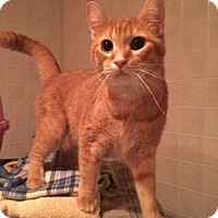 Adopt A Pet :: Camille - Byron Center, MI
