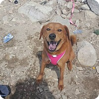Adopt A Pet :: Nala - San Diego, CA