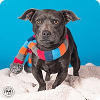 Adopt A Pet :: Handsome Jack - Northbrook, IL