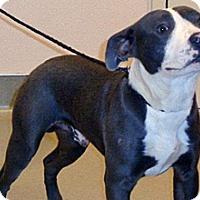 Adopt A Pet :: Vinnie - Wildomar, CA