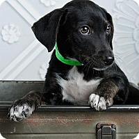 Adopt A Pet :: Patti - Denver, CO