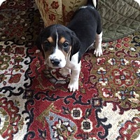 Adopt A Pet :: Spruce - Macon, GA