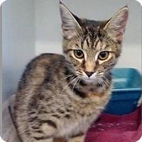 Adopt A Pet :: Jolene - Butner, NC