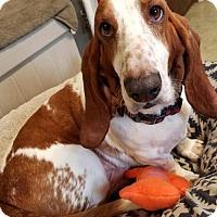 Adopt A Pet :: Walter - Burlington, WA