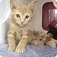 Adopt A Pet :: Maxine - Madison, AL