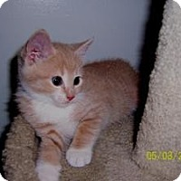 Adopt A Pet :: Ann - Island Park, NY