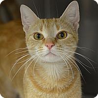 Adopt A Pet :: Thor (foster care) - Philadelphia, PA