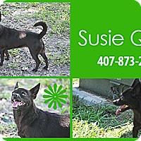 Adopt A Pet :: Susie Q - Orlando, FL