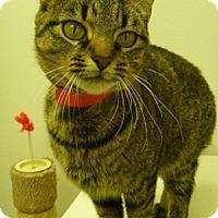 Adopt A Pet :: Teddi - Hamburg, NY