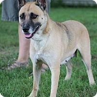 Adopt A Pet :: Zsa Zsa - Greeneville, TN