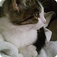 Adopt A Pet :: Tabby - Woodland, CA