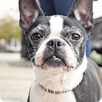 Adopt A Pet :: Macy - Knoxville, TN