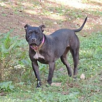 Adopt A Pet :: Baby - Brentwood, TN