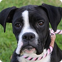 Adopt A Pet :: Betty - Red Bluff, CA