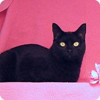 Adopt A Pet :: Evie - Colorado Springs, CO