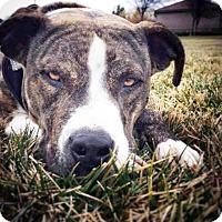 Adopt A Pet :: Molly - San Diego, CA