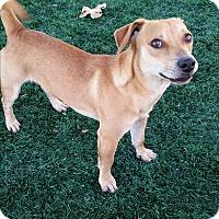 Adopt A Pet :: Charlie Brown - Chula Vista, CA