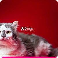 Adopt A Pet :: Scotty - Cincinnati, OH