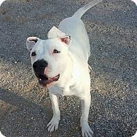 Adopt A Pet :: Ranger - Las Vegas, NV