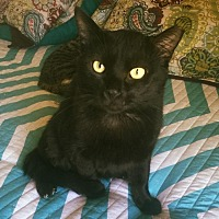 Adopt A Pet :: BLACKIE - Burlington, NC