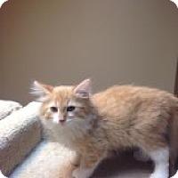Adopt A Pet :: Pancake-COMING SOON! - Bridgeton, MO