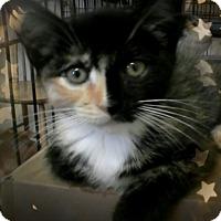Adopt A Pet :: Kohanna - Trevose, PA