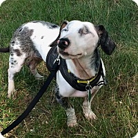 Adopt A Pet :: Adoption pending - Eli - Orangeburg, SC